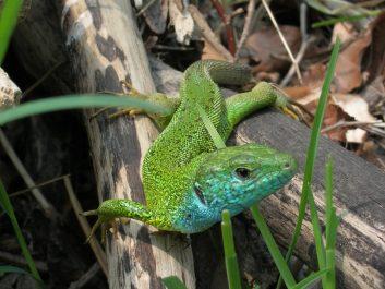 zeleni prijatelj